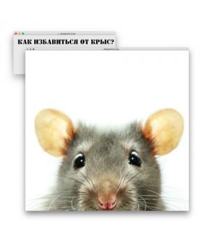 Крысы и мыши дома. Как избавиться?