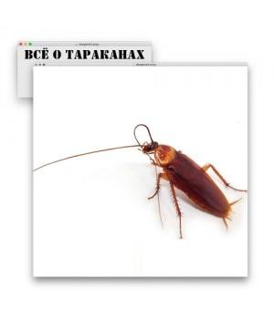 Рыжие (домашние) тараканы в квартире. Как избавиться?